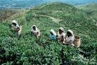 스리랑카에서 즐기는 홍차 한잔의 여유