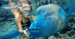국내에서는 쉽게 볼 수 없었던 다양한 해양생물을 볼 수 있다. (사진=머뭄투어 제공)