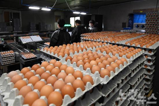 '살충제 계란' 부적합 농장 3곳 더 발견