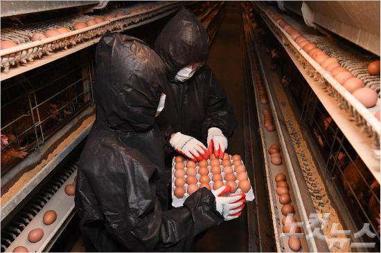 살충제 계란 친환경인증 기관에 '농피아' 무더기 재취업