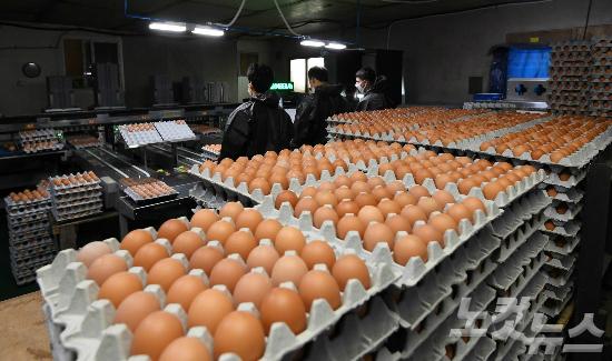 식탁서 '친환경 계란' 사라진다…양계협회, 친환경 인증 반납키로