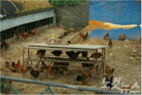 산란계농장 'DDT 검출'에 토양·지하수 긴급 실태조사