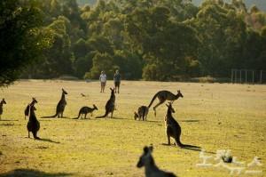 그램피어즈 국립공원에서 트래킹도 즐기고 캥거루 등 야생동물들도 만날 수 있는 체험(사진=호주관광청 제공)