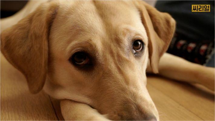 [씨리얼]강아지 딱 1년만 키우고 떠나보내는 사람