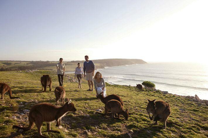 우리끼리만 즐길 수 있는 호주 패키지여행