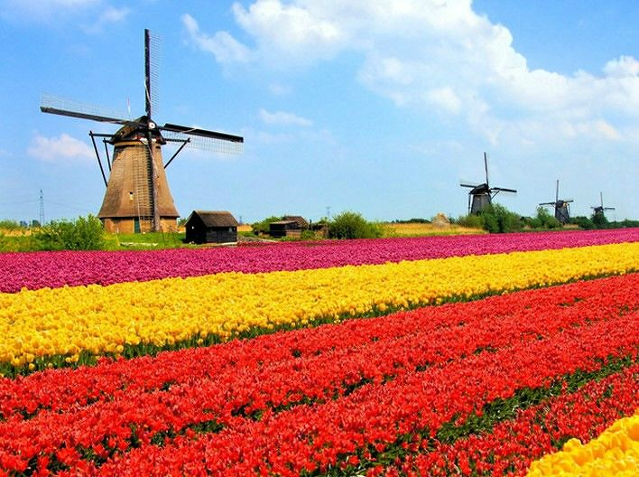 [포토] 튤립이 봄을 알리는 해외 여행지 '네덜란드·터키'