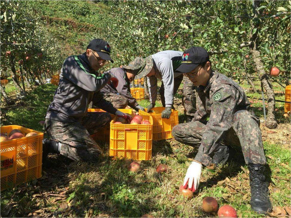 11일 육군 50사단이 태풍 콩레이로 큰 피해를 입은 영주 일대에서 피해복구 작업을 벌이고 있다. (사진=육군 50사단 제공)