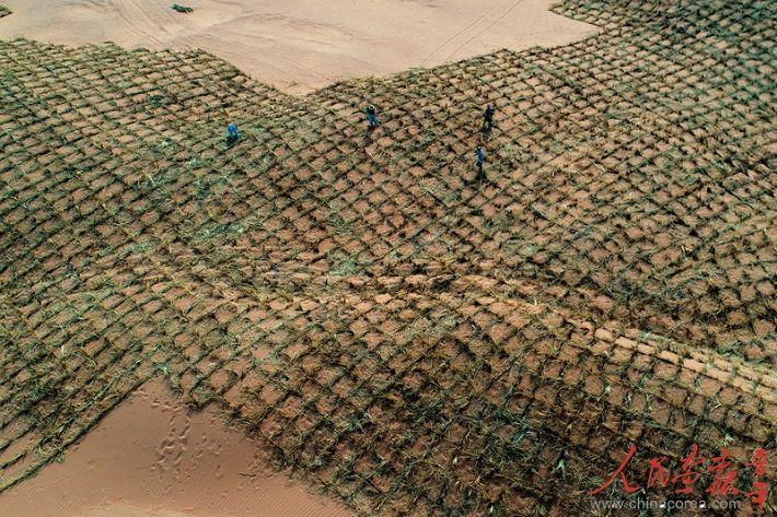 [깜짝뉴스] 중국 국토 18% 사막, 밀짚으로 엮어 막다