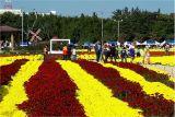 포항시 22일부터 '뱃머리마을 국화잔치' 개최