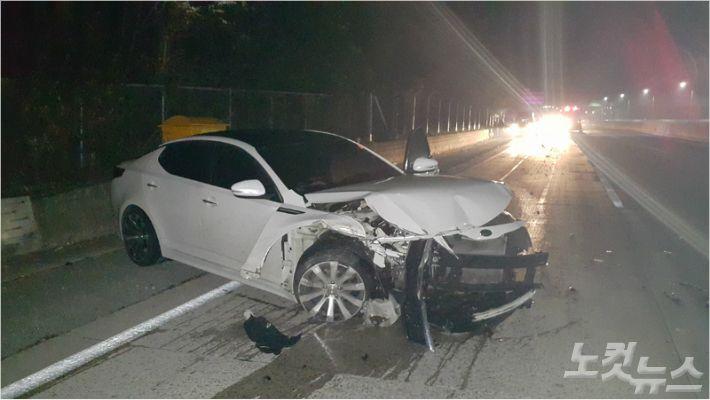 고속도로에 멧돼지가 뛰어들어 차량과 충돌했다. (사진=부산경찰청 제공)