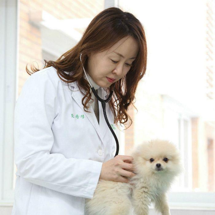 반려견, 피부염·외이염으로 동물병원 많이 찾아