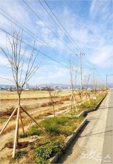 흥해읍 일대에 이팝나무를 심은 모습(사진=포항시 제공)