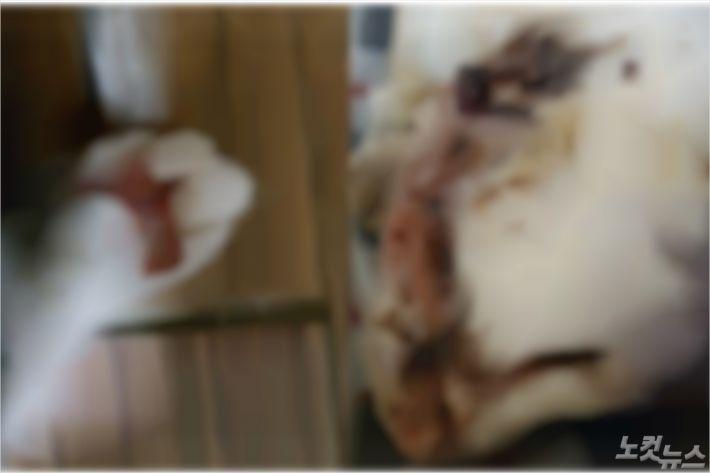 지난달 29일 군산시 나운동에서 발견된 고양이. (사진=독자 제공)
