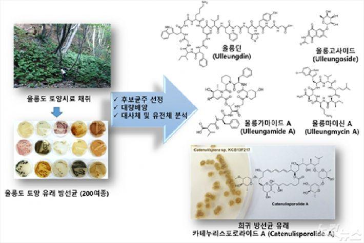울릉도 유래 토양 방선균으로부터 새로운 생리활성물질 발굴 연구 개요