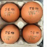 제주 출하 달걀서 금지 항생제 검출 '긴급회수'