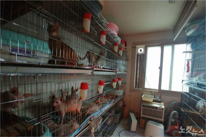 부산의 한 주택에서 고양이 수백마리를 불법 사육한 현장이 경찰에 적발됐다. (사진=부산경찰청 제공)