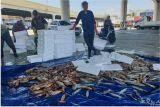 '감자'에 이어 '오징어'…동해시 오징어 팔아주기 나서
