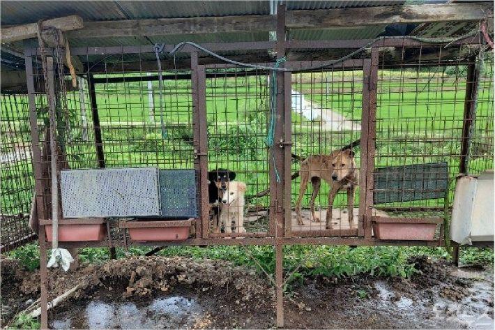 전북 임실군의 유기견 보호소. 동물보호단체의 지적에 유기견들은 다른 곳으로 옮겨졌다. (사진=제보자 제공)