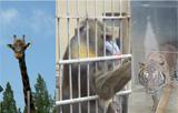 '동물원 잔혹사'…죽음으로 말하는 동물들