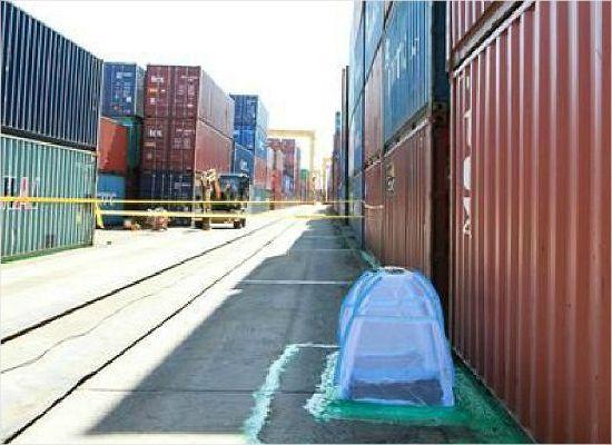 붉은불개미 막아라…국경검역 강화