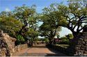 제주 숲 만들어낸 노거수(老巨樹) 보호