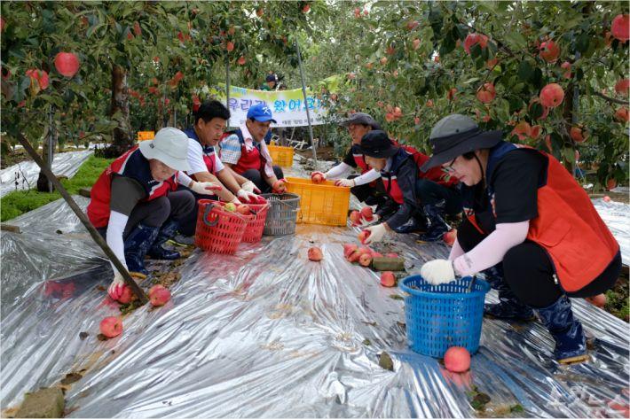 태풍 링링 피해 충남 과수농가에 자원봉사자 발길 이어져