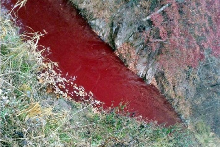'핏빛으로 물든 하천'…무리한 살처분이 부른 환경 오염