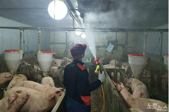 경북도, 경기·인천·강원외 돼지 반출입 허용