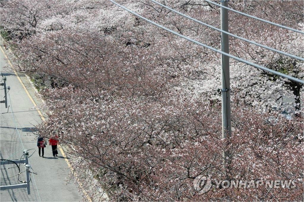"""허성무 """"진해 벚꽃축제, 절대 오지 마이소"""""""