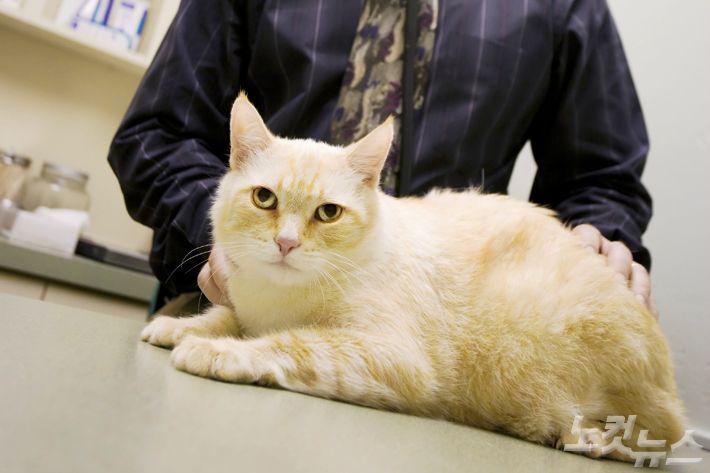 집사가 코로나 감염…고양이는 '어찌되는 고양?'