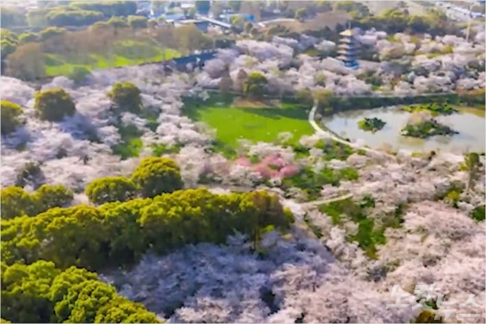 [영상]봄 꽃 만발한 우한 여름에는 갈 수 있을까?