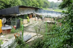 [영상]'150마리 함께 살고, 개농장에 팔리고', 열악한 유기견 보호소