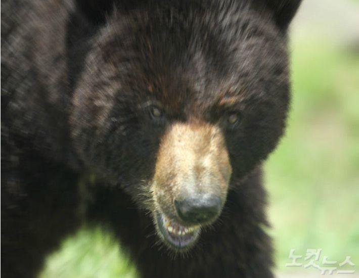 집에 들어온 흑곰…맨주먹으로 가족지킨 美 아빠들