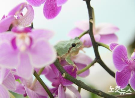 경칩, 잠에서 깬 개구리
