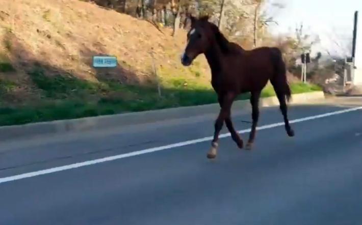 [영상]서해안고속도로에 말이? 수km 뛰어다녀…경찰 출동