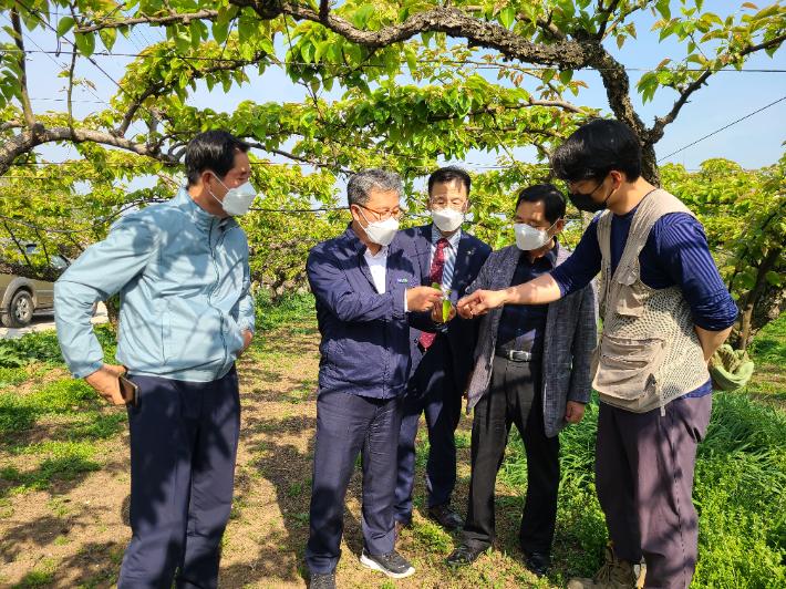 충남세종농협, 천안 저온피해 배 농가 찾아 지원방안 논의