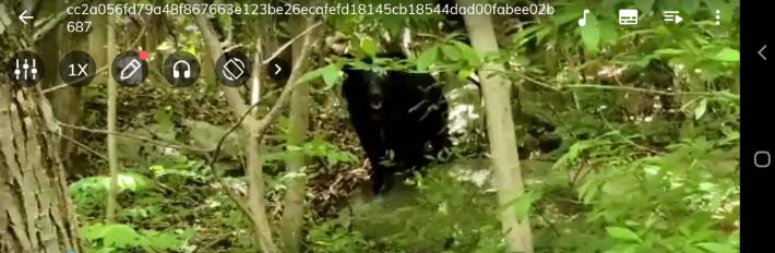 겨울잠 깬 반달가슴곰, 광양 민가서 닭 잡아먹어