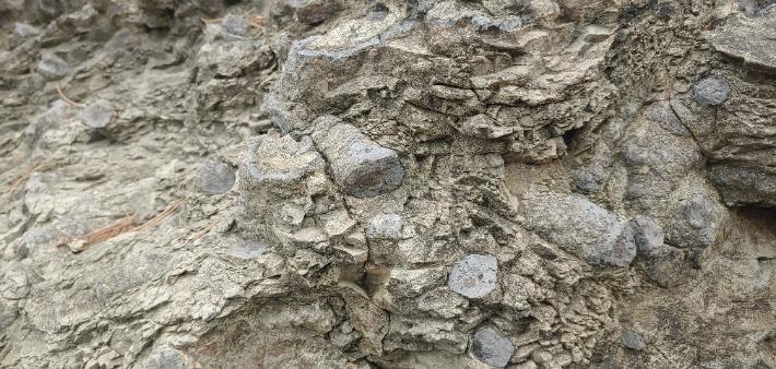 희귀한 '사천 백악기 나뭇가지 피복체 산지' 천연기념물 된다