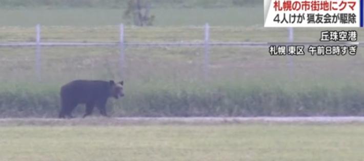 日 삿포로 시내 곰 출몰 4명 부상, 학교 휴교·공항 결항