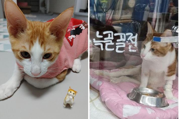"""입양 6개월만에 새끼 고양이 하반신 마비…""""뼈 13개 부러져""""[이슈시개]"""
