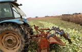 농작물 산지폐기 무엇이 문제인가